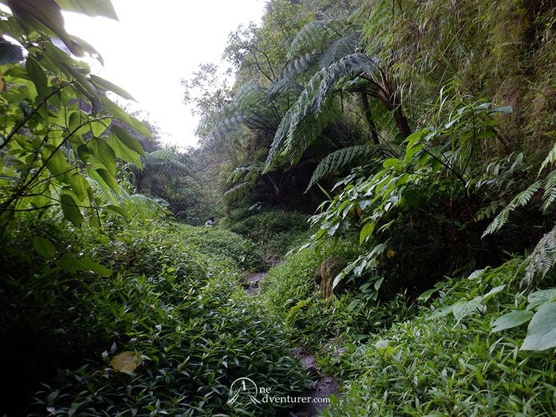 mt pinatubo one adventurer forest