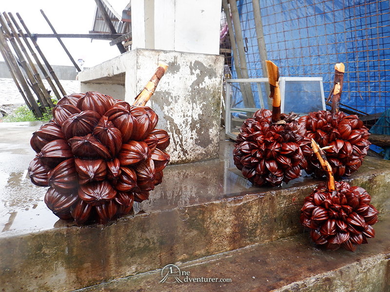 baler palm fruit one adventurer