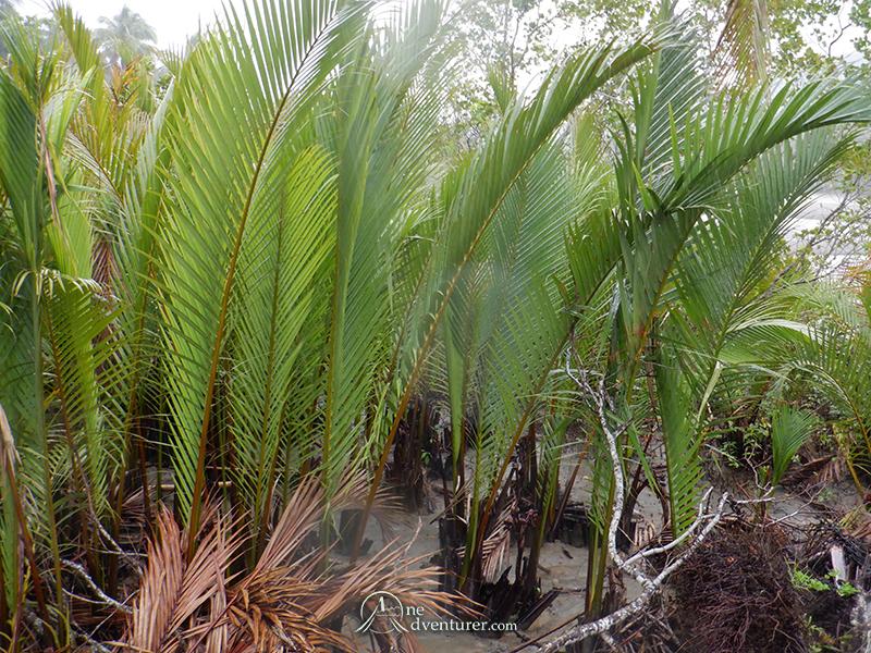 baler palms growing one adventurer